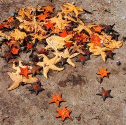 Притча про морские звезды