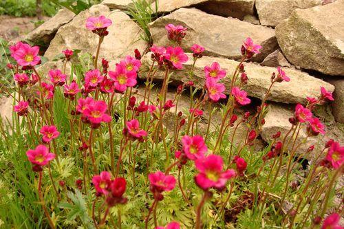 цветы, природа,